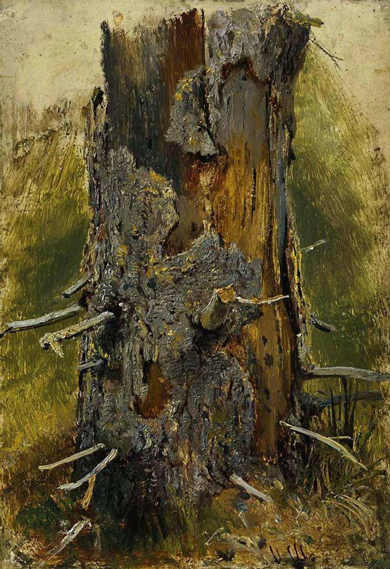 在树干上的树皮的干